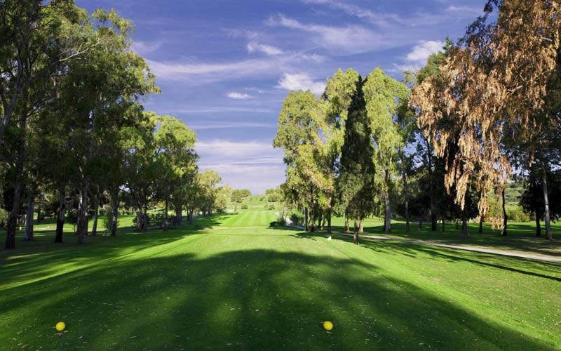 tree lined fairway on atalaya old course