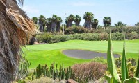 cactus surrounds the 8th green