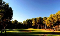 trees lining the 8th hole at poniente